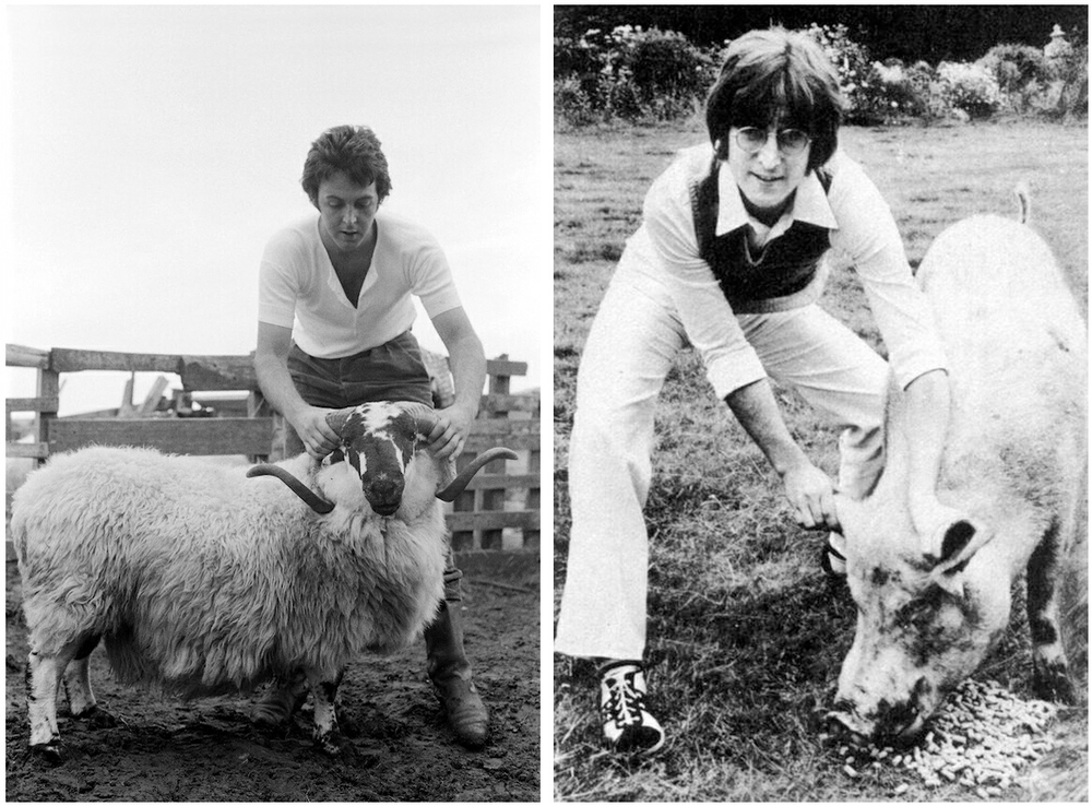 Paul McCartney on his 1971 album Ram, and Lennon with a pig on the Imagine insert.