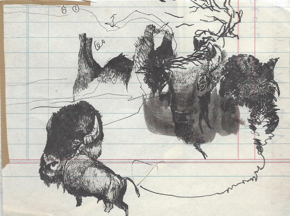American Bison 16.jpg