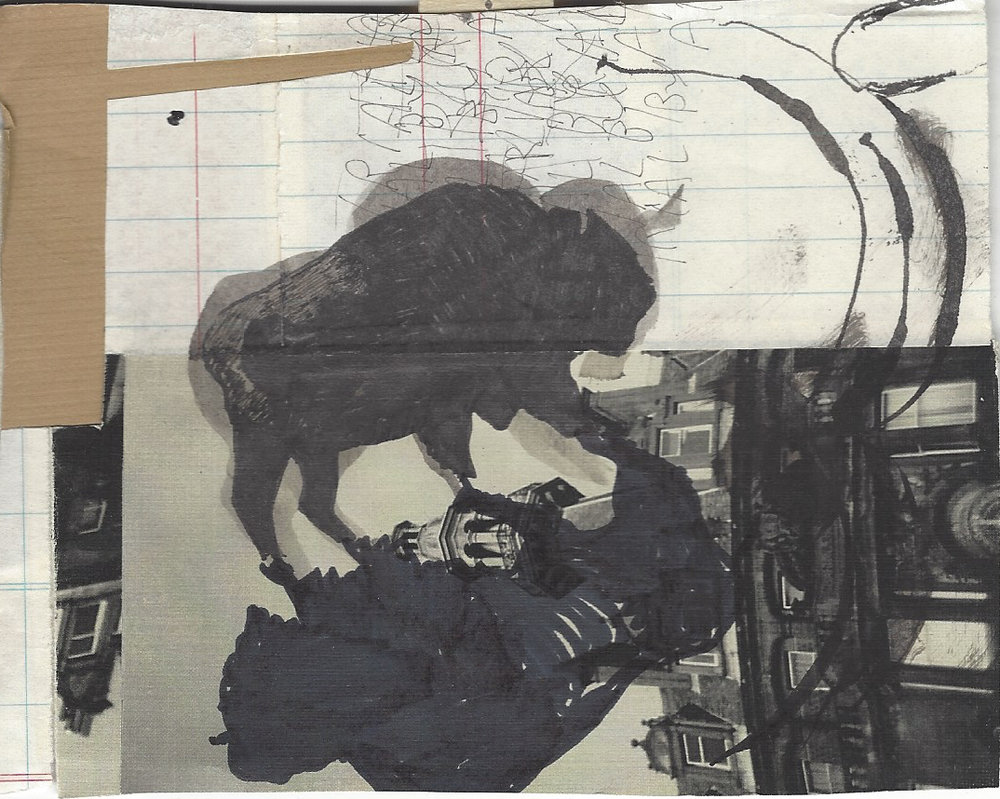 American Bison 9.jpg