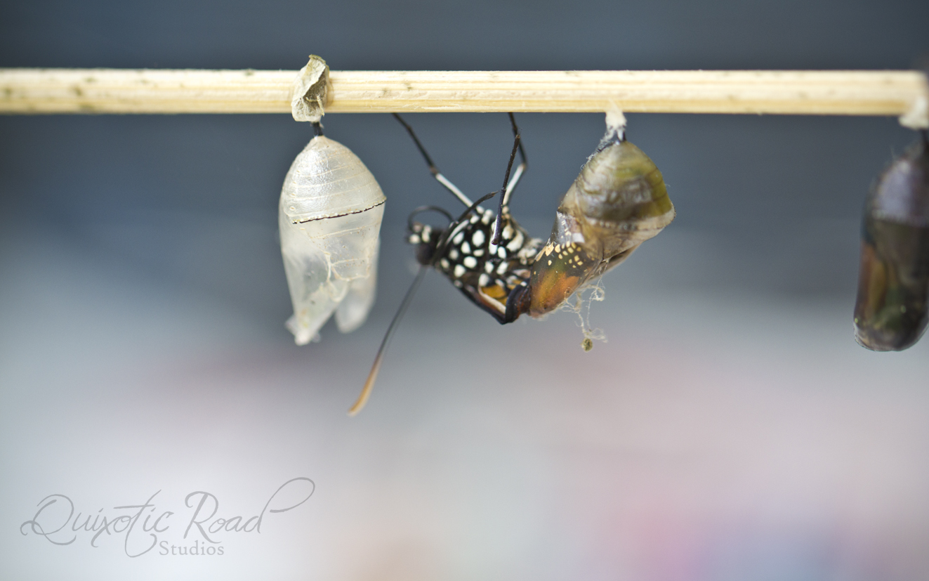 photo essay the butterflies of chiang mai quixotic road it