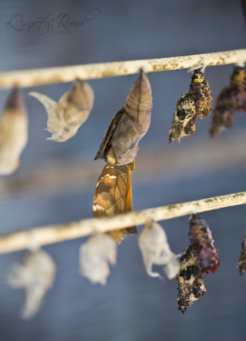 photo essay the butterflies of chiang mai quixotic road lot of the butterflies didn t survive their fragile re awakening into the world beautiful motionless little creatures frozen in time and half emerged