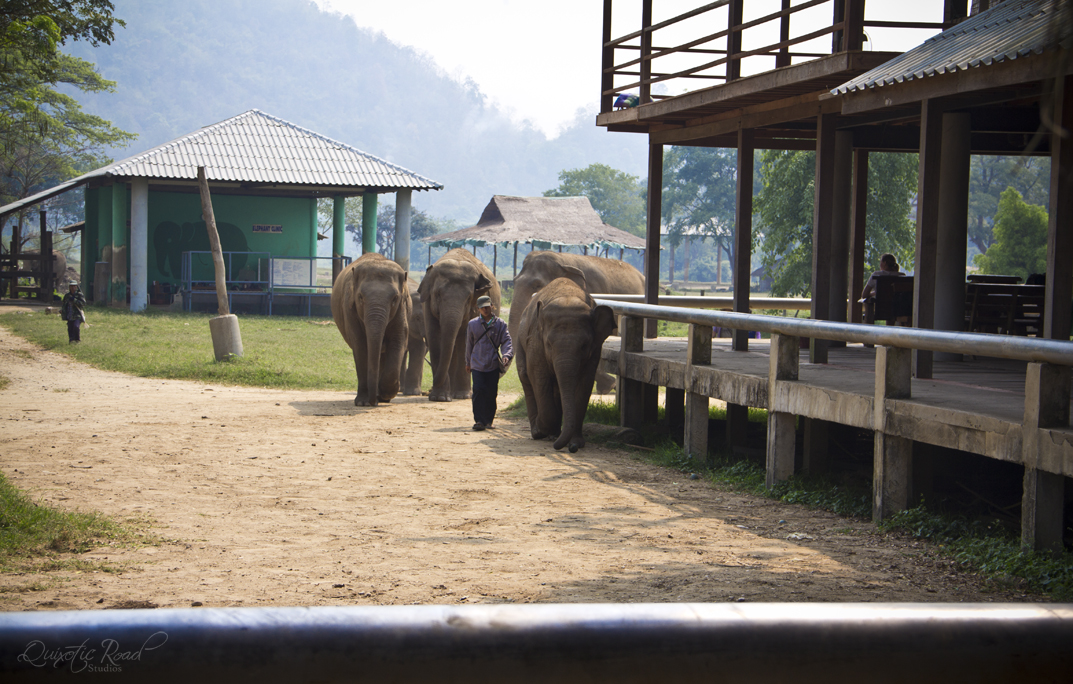 photo essay elephant nature park quixotic road the world would be a sadder place out elephant butts