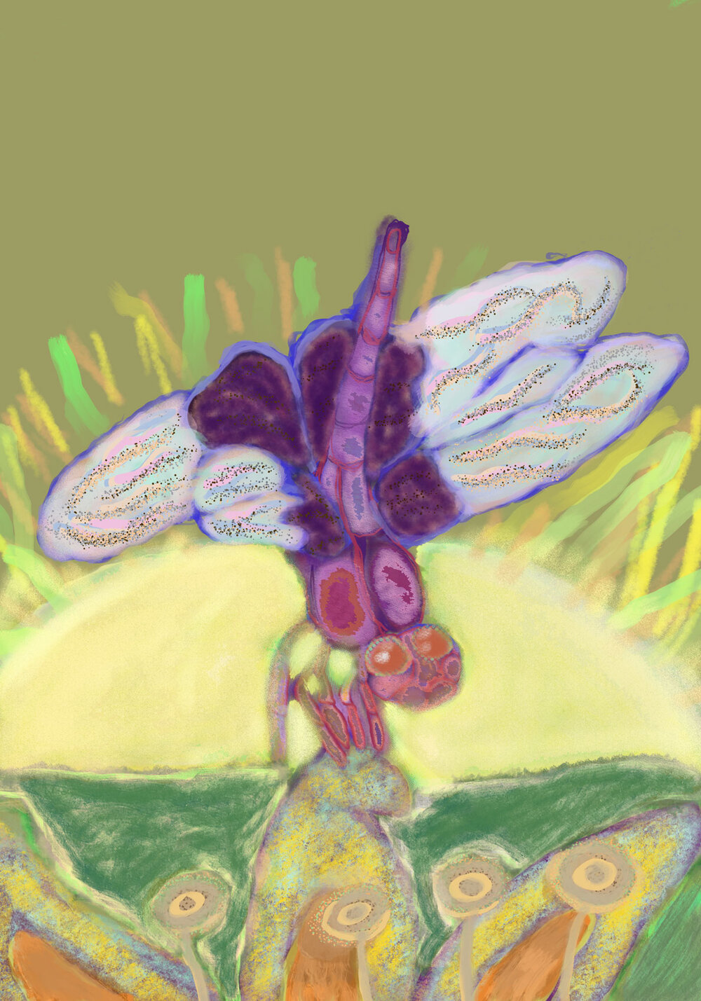 Early Dragonfly,  2016 iPad drawing Dimensions variable