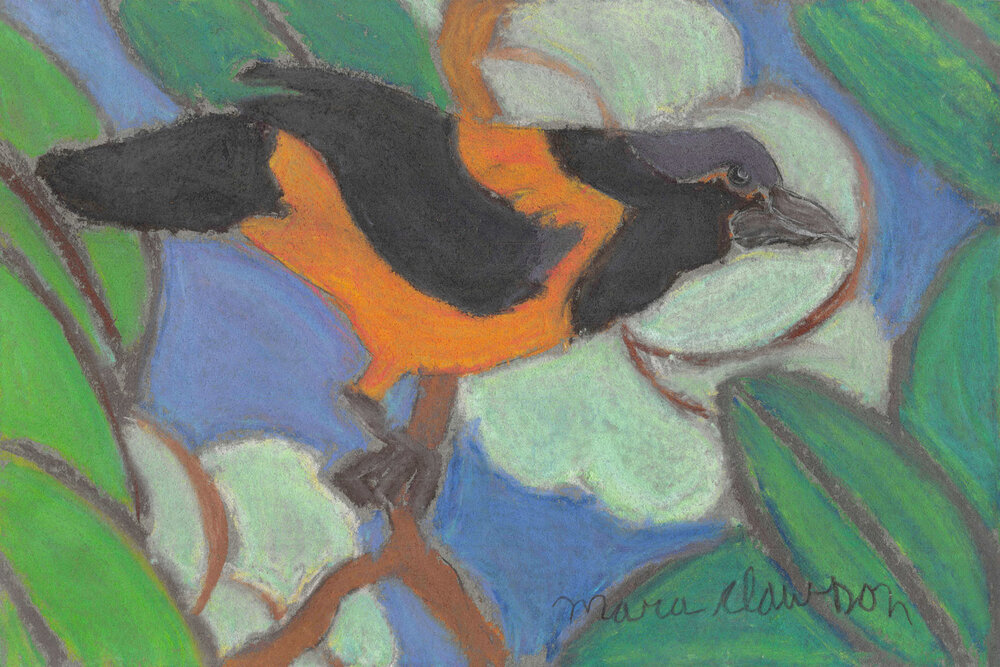Violet Head (Black-vented Oriole),  2013 Soft pastel on paper, Framed 8 x 12 in.