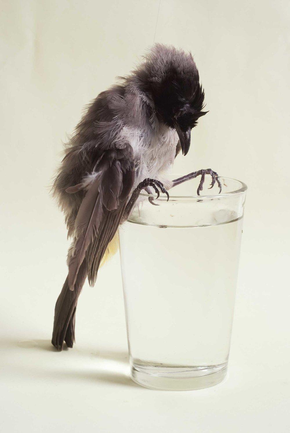 Bird on Glass