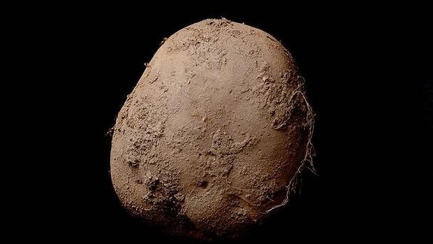 Kevin Abosch's $1.5 Million Potato