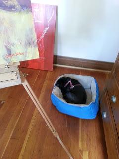 studio-dog.jpg