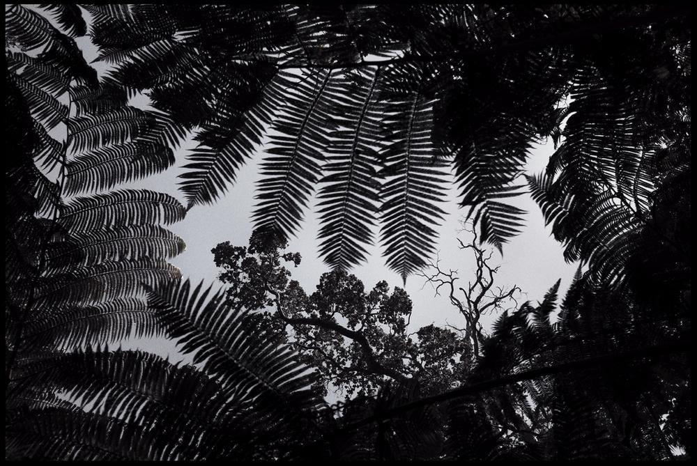 4.Tree.jpg