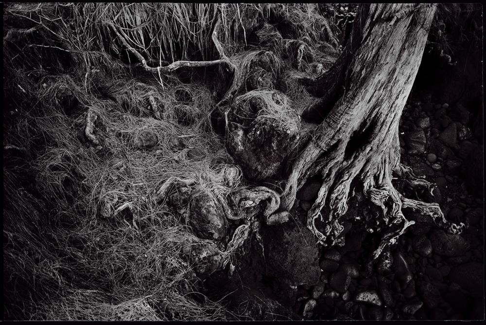 5.Tree.jpg
