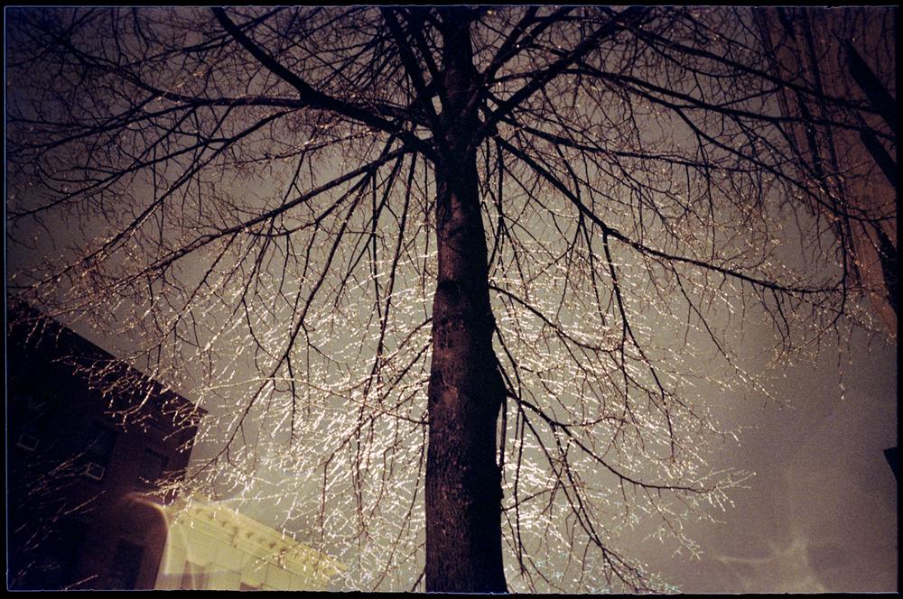 7.Tree.jpg