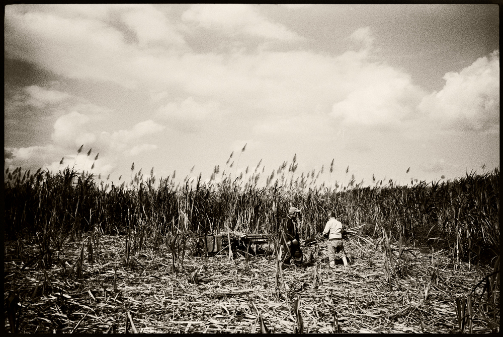 Sugar plantation workers. Ada, Okinawa