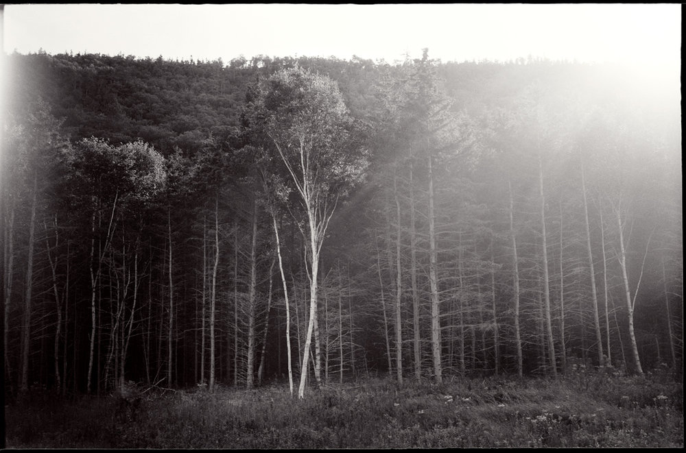 Tree_4.jpg