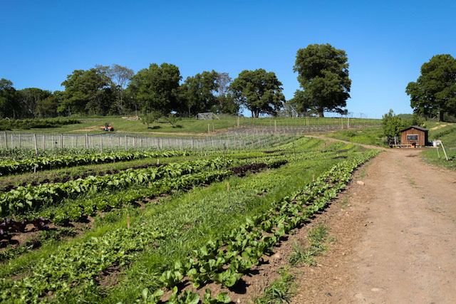 Stone Barns Lettuce Garden - Hill Reeves; photo by Alexis Buatti Ramos