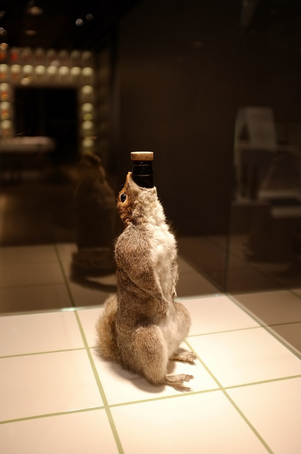 Taxidermy Squirrel Beer at the Stockholm Spritmuseum