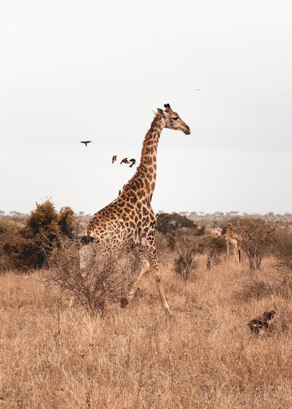 SOUTH AFRICA-2.jpg
