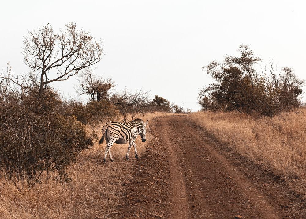 SOUTH AFRICA-5.jpg