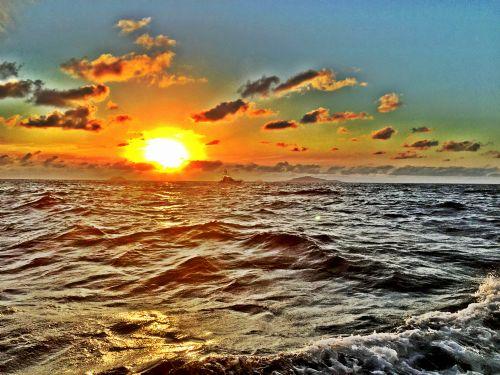 sunsetlizard.jpg