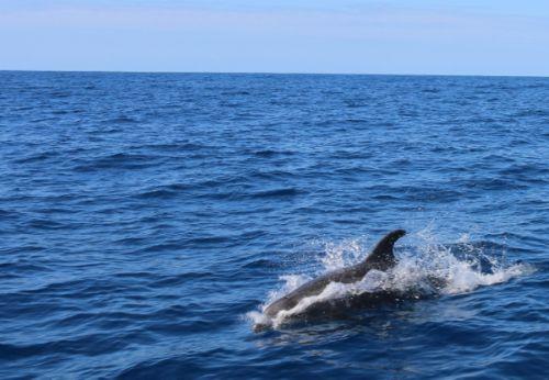 dolphins_tairua.jpg
