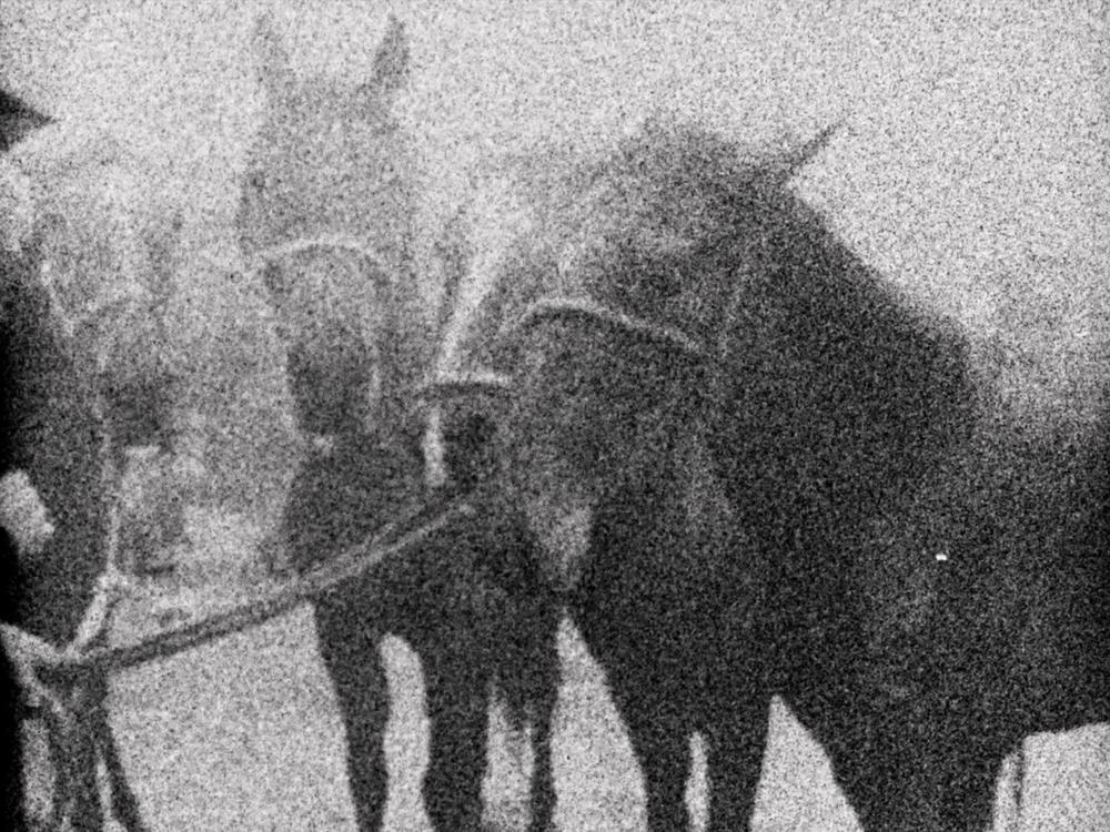 3 Dreams of Horses  by Mike Hoolboom