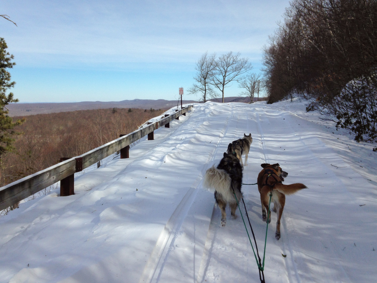 Coldest day of winter (so far)? No problem! 7.6 miles at Stokes/High Point State Forest.