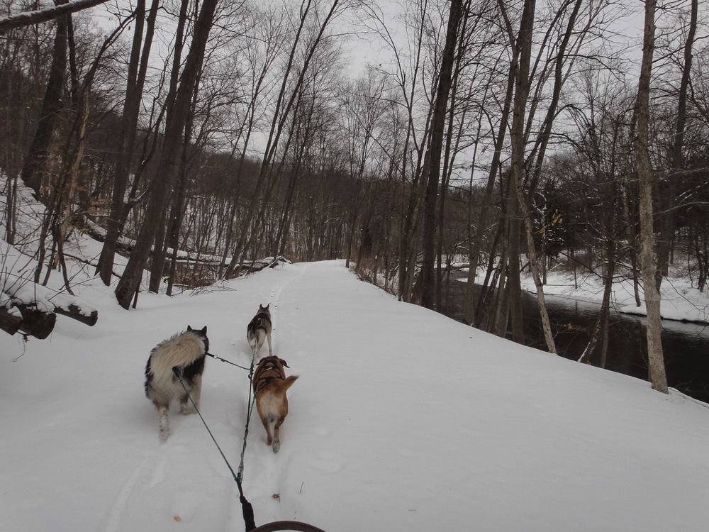 Mushing through deep snow along the Paulinskill Valley trail.