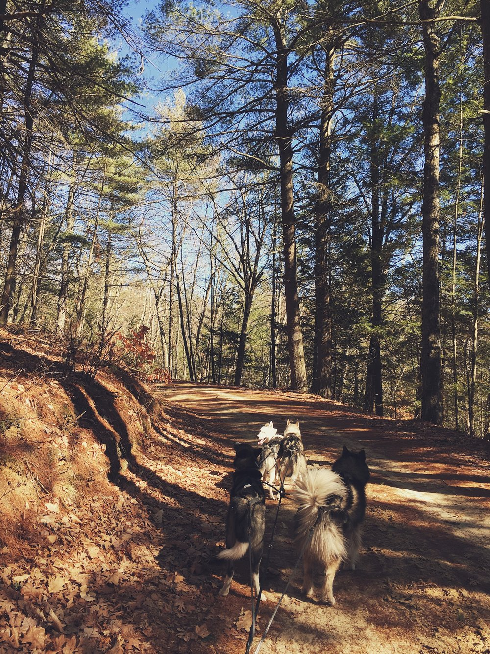 Fun run at a new spot: Nepaug State Forest.