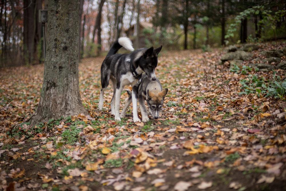 dogs (5 of 16).jpg