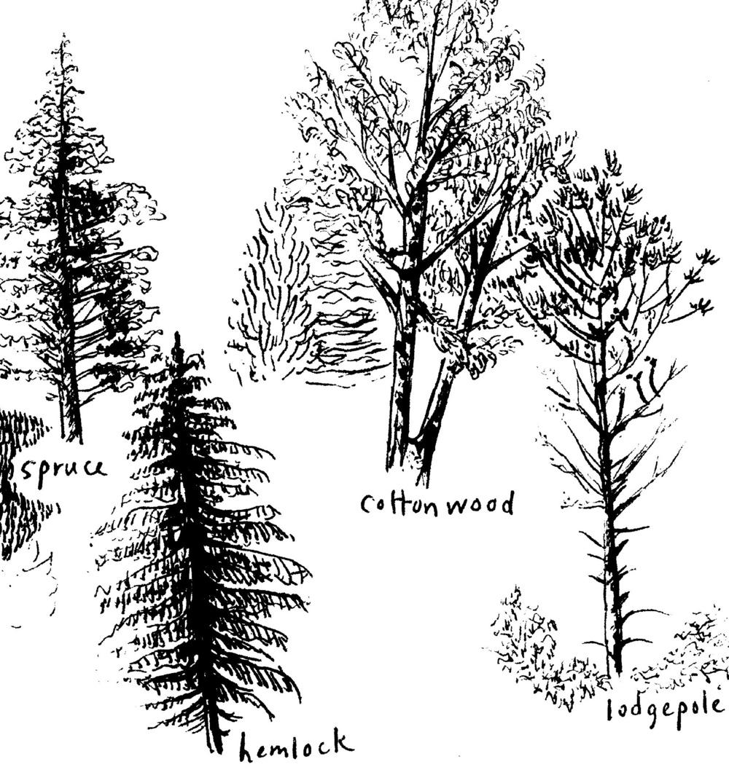 trees, Mara Menahan.jpg