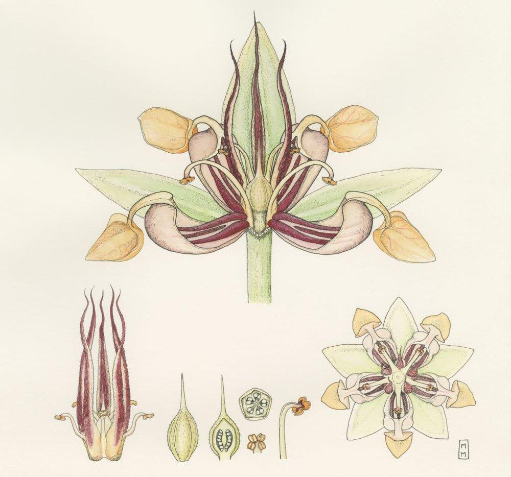 Chocolate flower Mara Menahan.JPG