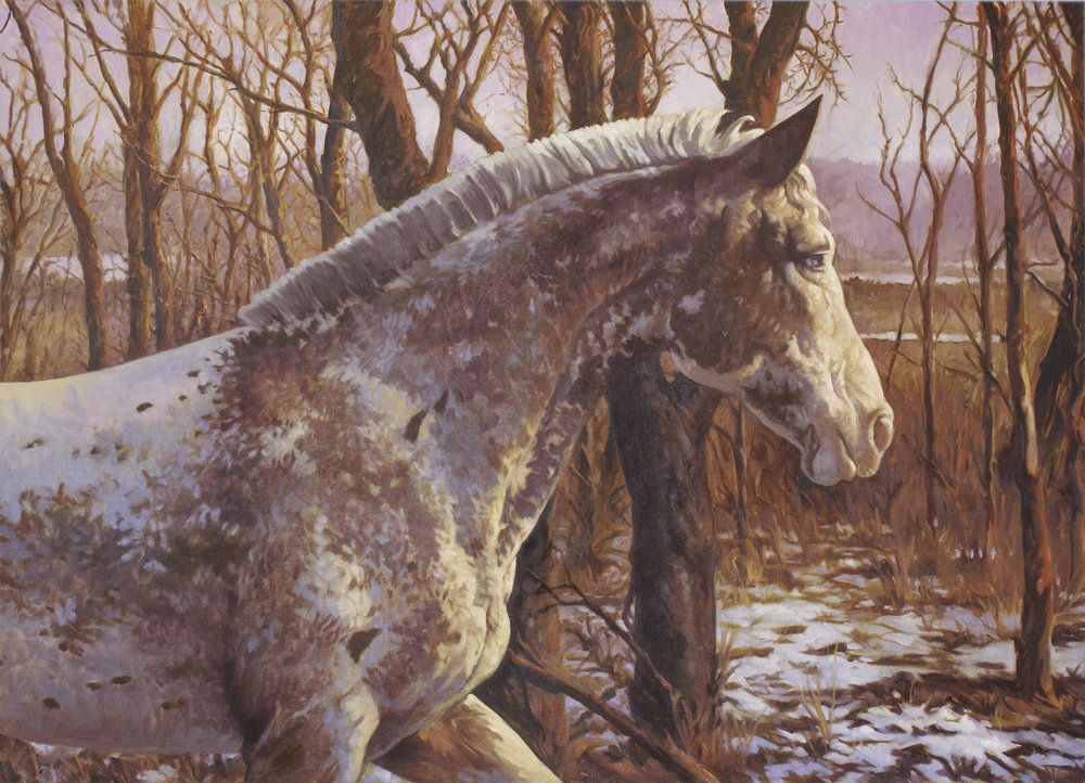 appaloosa in winter.jpg