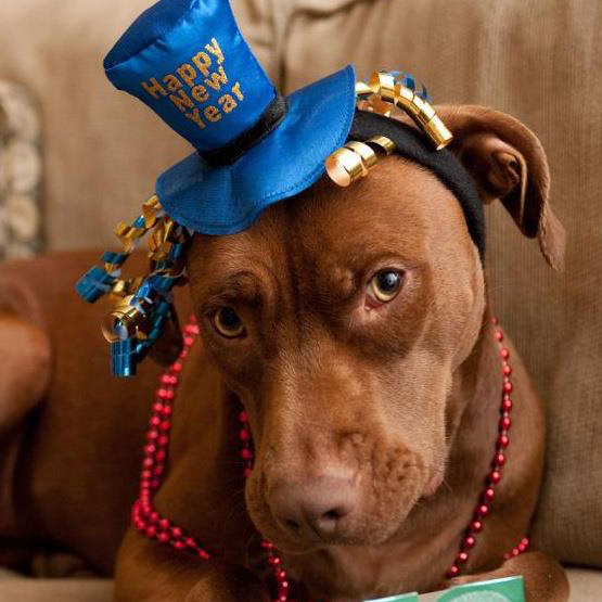"Brown Dog says, ""Join us on January 2nd!"""