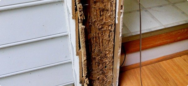 A House With Damage From Termites Often Looks The Same As Any Other On Surface Can Build Nests Hidden Inside Walls Causing For
