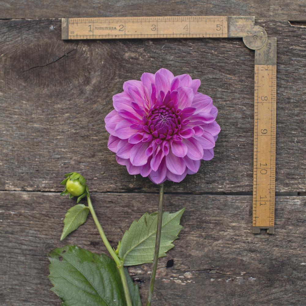 """Under 4"""" Blooms"""