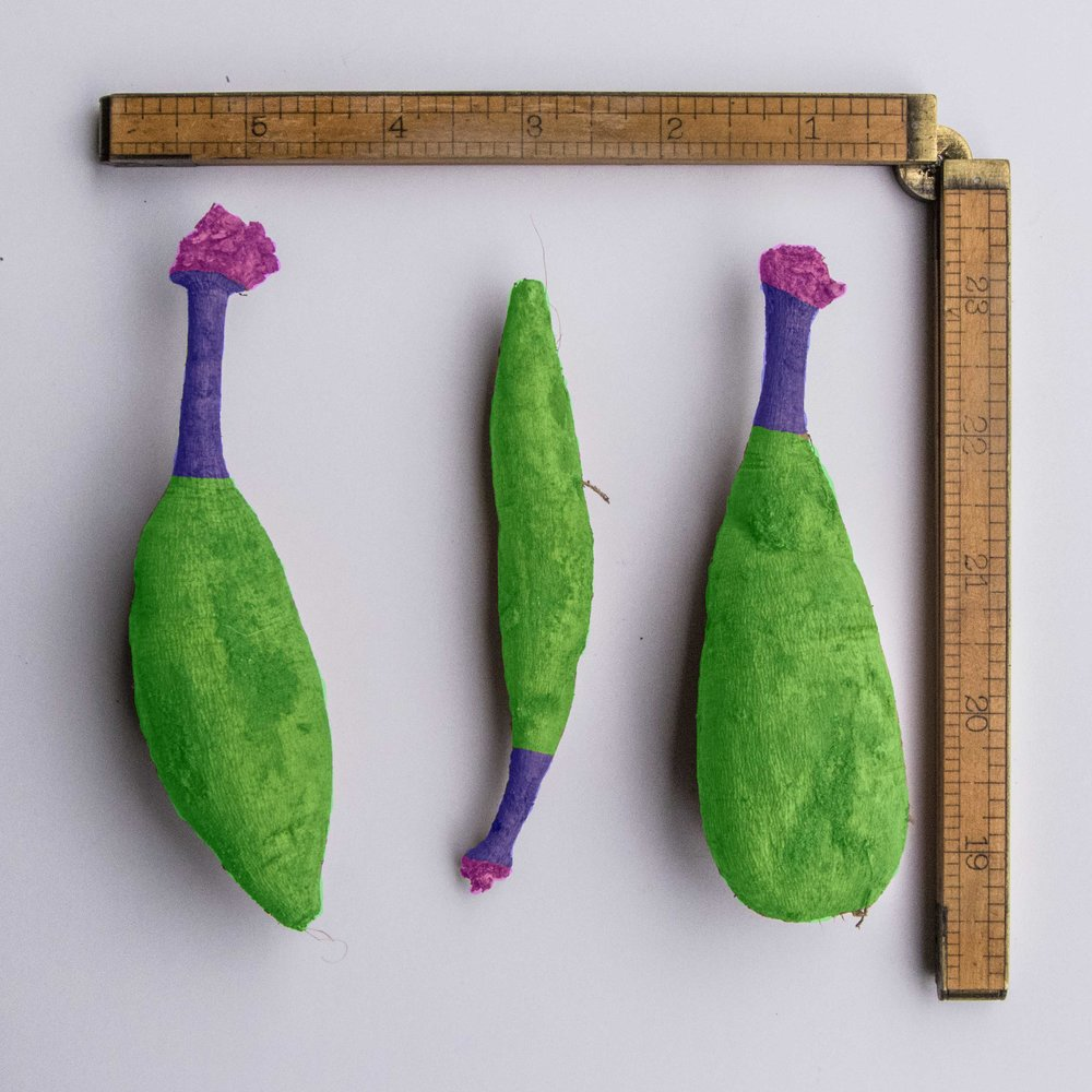 Color coded parts of a tuber. Green is the tuber, purple is the neck. and pink is the crown.