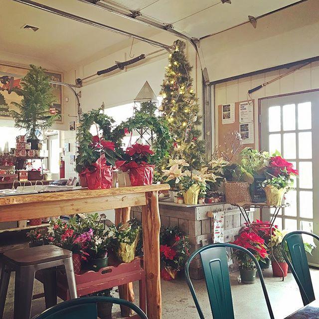festive lunch view @hayfieldsmarket 🎄🎁