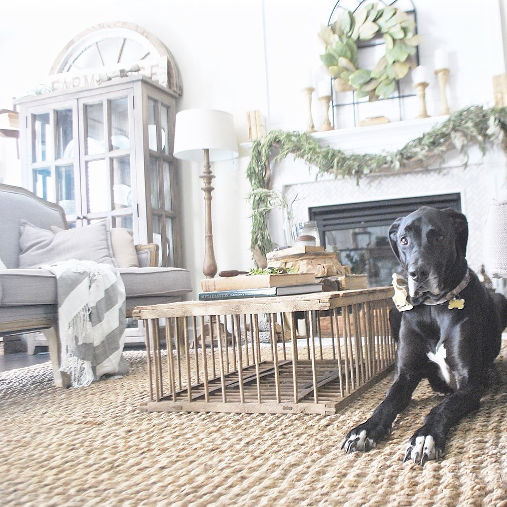 Farmhouse Living Room With Great Dane Bella- Plum Pretty Decor and Design