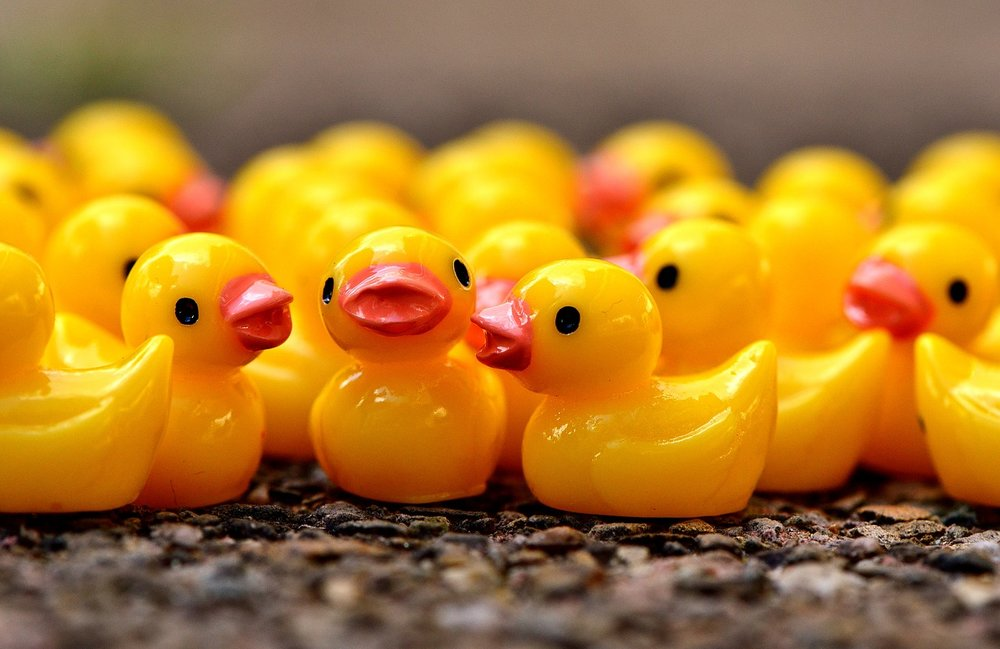 ducky-2482801_1280.jpg