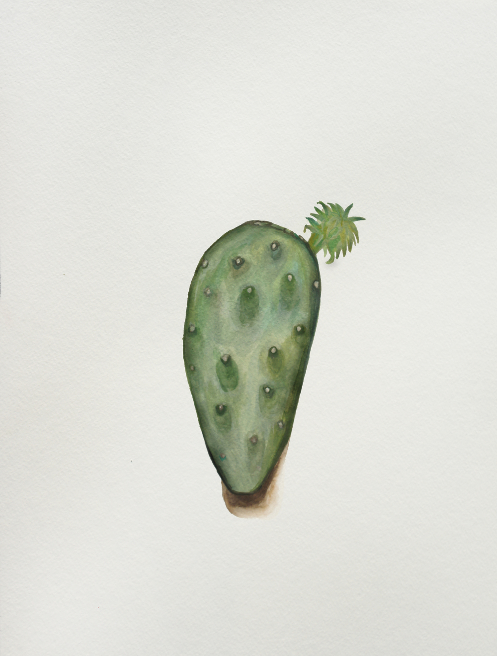 Everything Is Cactus