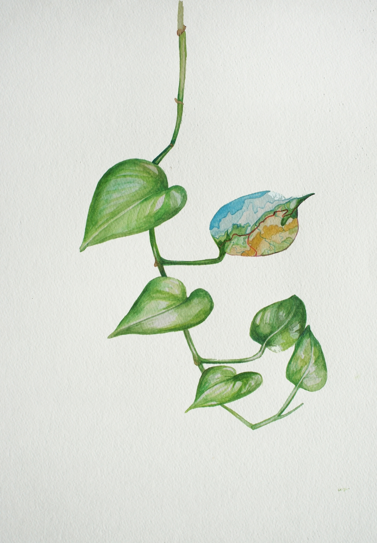 Plant Imitates Map