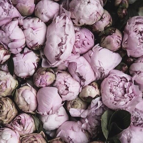 Qual a sua flor preferida? 🌸 #welovepeonies