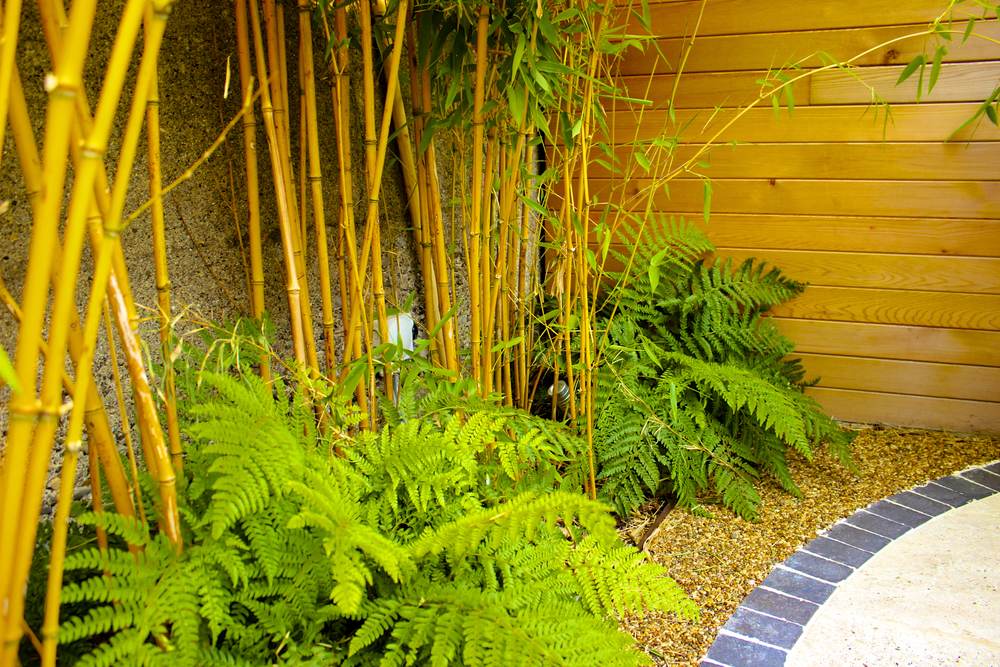 golden bamboo and ferns