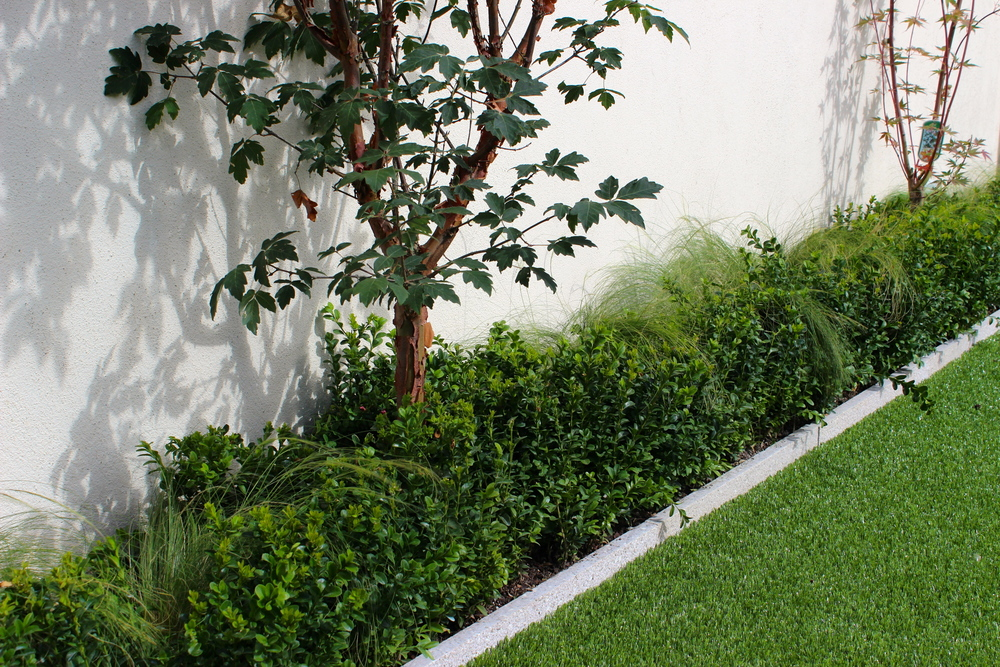 Paperback Maple and Buxus