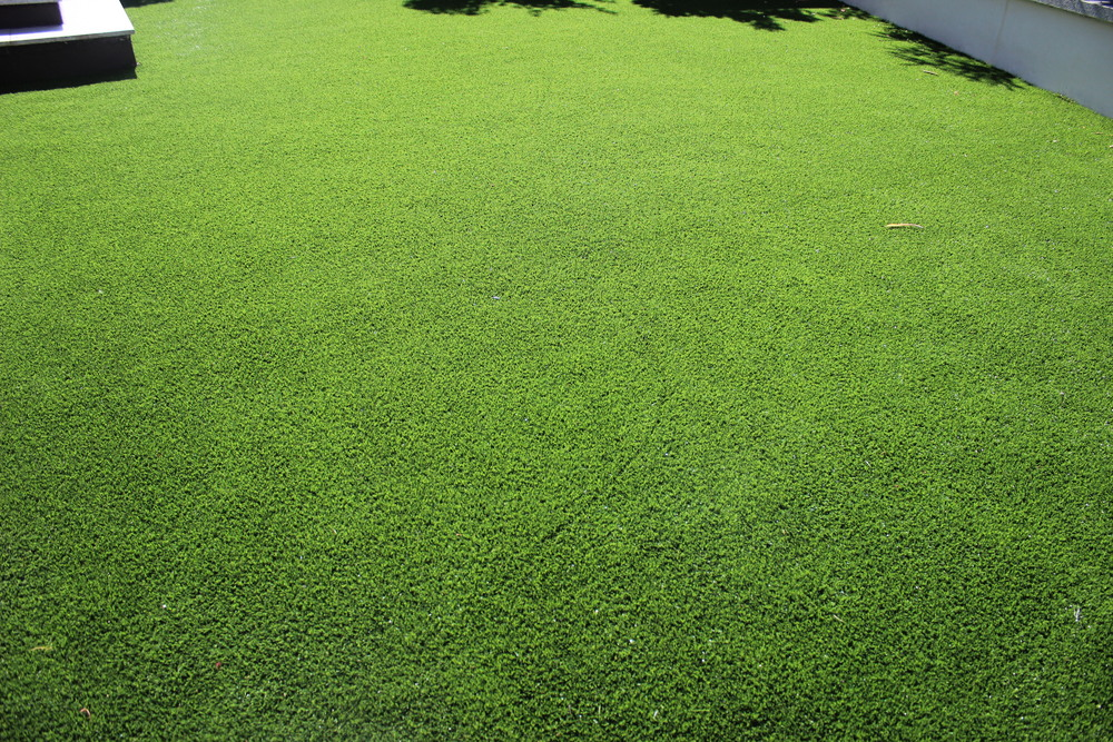 close up of Garden Lawn