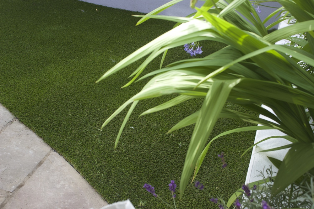 plants and artificial grass