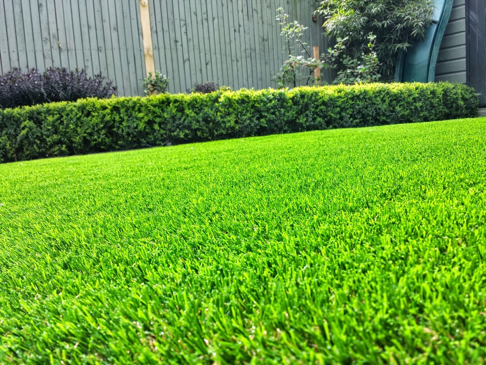 Buxus and TigerTurf