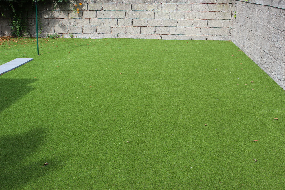 Green low maintenance lawn