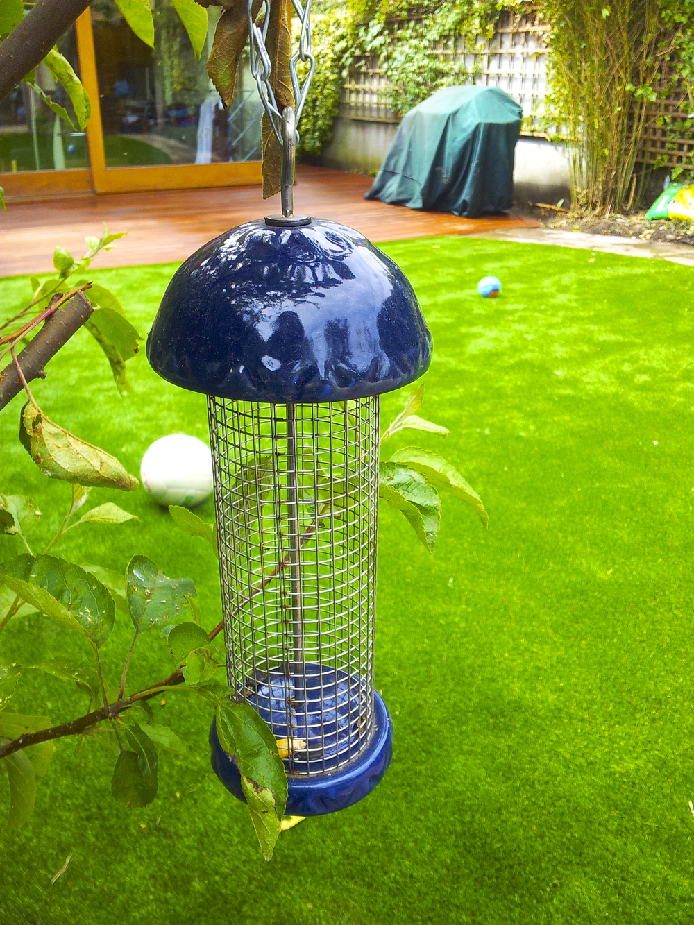 bird feeder and lawn