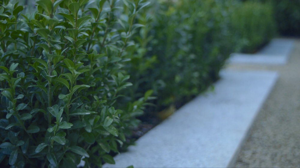 Buxus and Granite