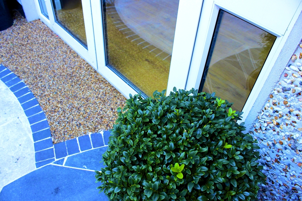 Buxus sphere at Doorstep