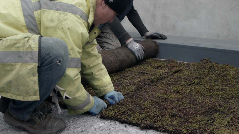 Green roof installers